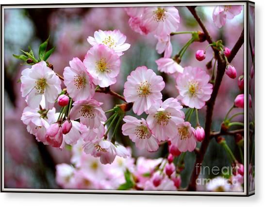 The Delicate Cherry Blossoms Canvas Print