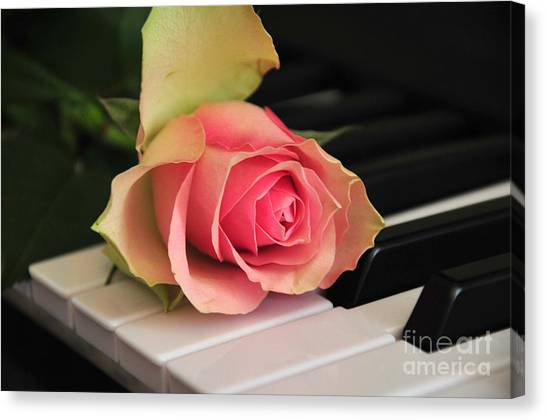 The Delicate Rose Canvas Print
