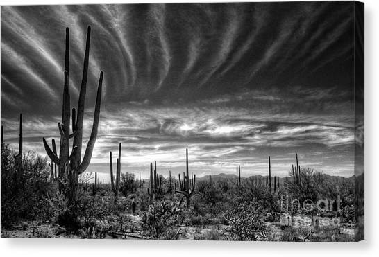Sonoran Desert Canvas Print - The Desert In Black And White by Saija  Lehtonen