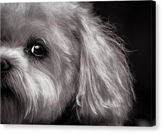 Maltese Canvas Print - The Dog Next Door by Bob Orsillo