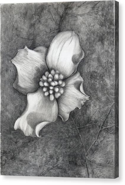 The Dogwood Canvas Print