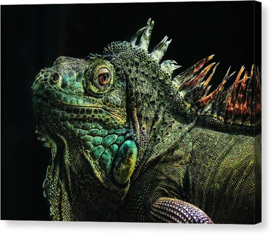 Iguanas Canvas Print - The Dragon by Joachim G Pinkawa