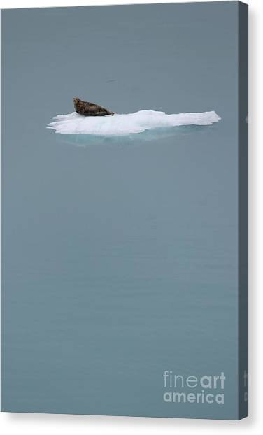 The Drifter Canvas Print by Sophie Vigneault