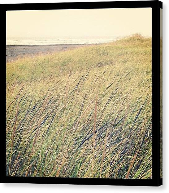 Seagrass Canvas Print - The Dunes Of Long Beach by Emily Lee