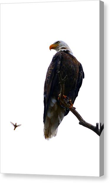 The Eagle And The Hummingbird Canvas Print
