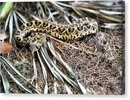 Poisonous Snakes Canvas Print - The Eastern Diamondback Rattlesnake by JC Findley