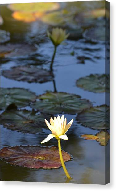 The Echo Of A Lotus Flower Canvas Print