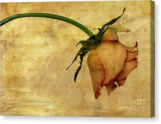 Rose Canvas Print - The End Of Love by John Edwards