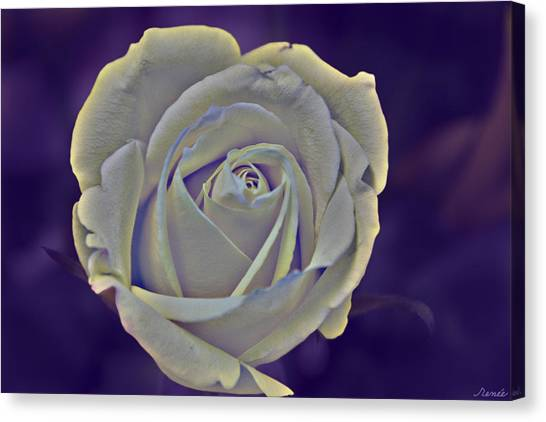 The Ethereal Rose  Canvas Print