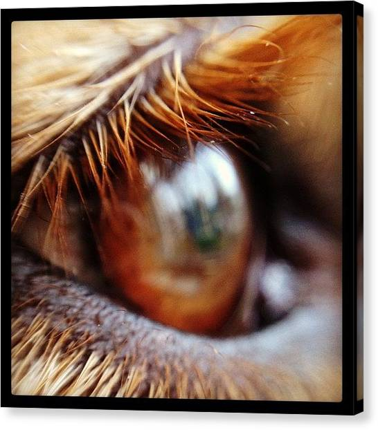 Golden Retrievers Canvas Print - The Eye Of Max by Beth H