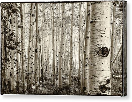 The Eye Of The Aspen Canvas Print