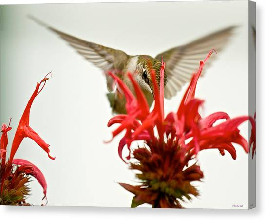 The Eye Of The Hummingbird Canvas Print