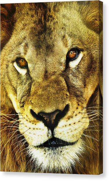 The Eyes Have It Canvas Print by Steve Smith