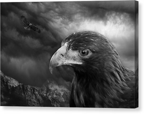 The Eyes Of The Hawk Canvas Print
