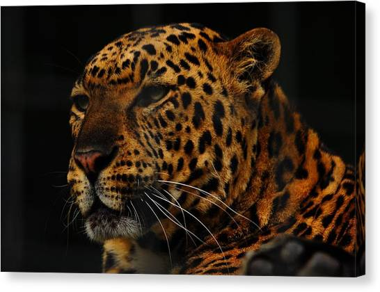 The Face Of A Leopard Canvas Print by Valarie Davis