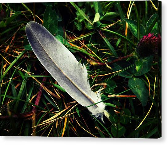 The Fallen Feather Canvas Print