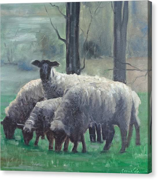 The Family Of Sheep Canvas Print