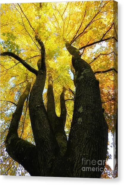 The Family Tree Canvas Print