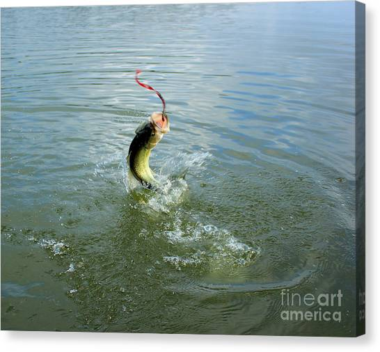 Bass Fishing Canvas Print - The Fight by Thomas Danilovich