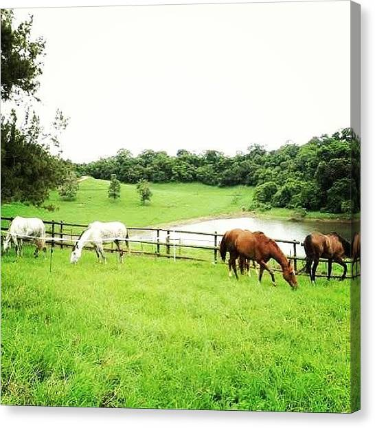 Thoroughbreds Canvas Print - The First Time We Took The Horses To by Joyks Rickards