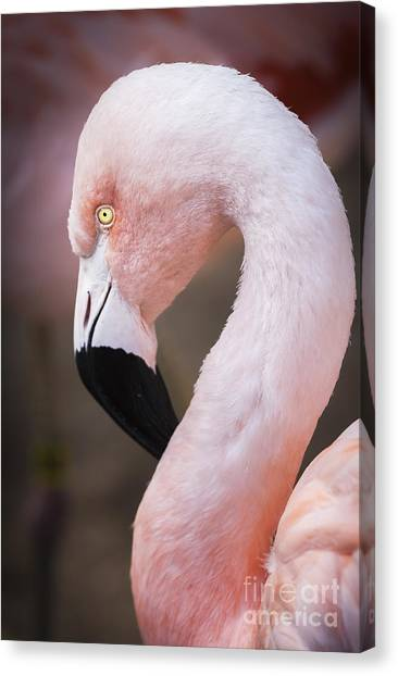The Flamingo, Animal Decor, Nursery Decor, Flamingo Gifts, Flamingo Phone Case,  Canvas Print