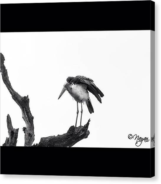Storks Canvas Print - The Flapping Winger  Though The by Nayan Hazra