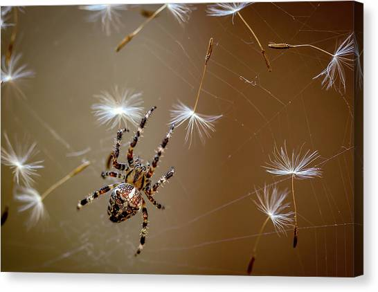 Spiders Canvas Print - The Flies Are Finished. Only Dandelions Salad Left. by Dmitry Skvortsov