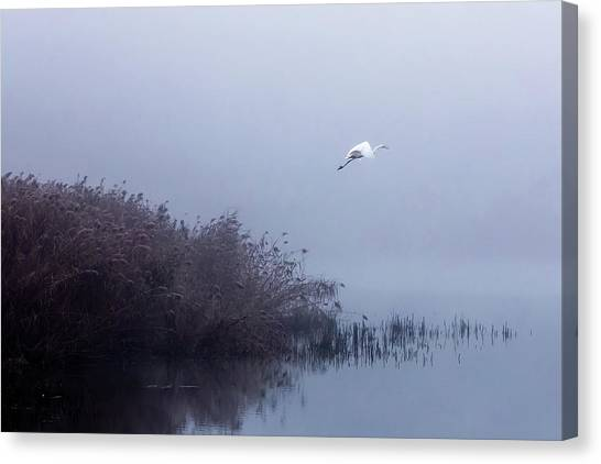Egret Canvas Print - The Flight Of The Egret by Fran?ois Le Rolland