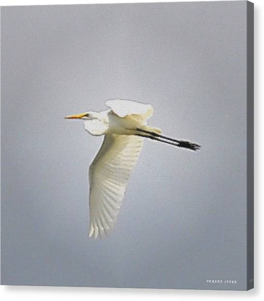 The Flight Of The Great Egret With The Stained Glass Look Canvas Print