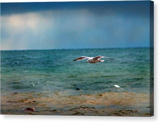 The Flight Canvas Print by Rhonda Humphreys