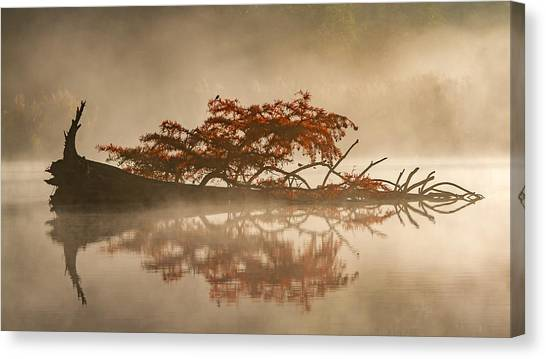 Fallen Tree Canvas Print - The Flying Dutchman by Barr? Thierry
