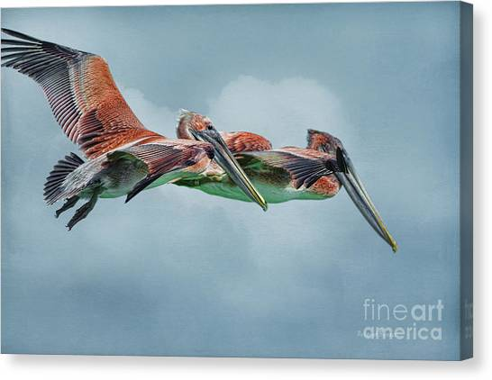 The Flying Pair Canvas Print
