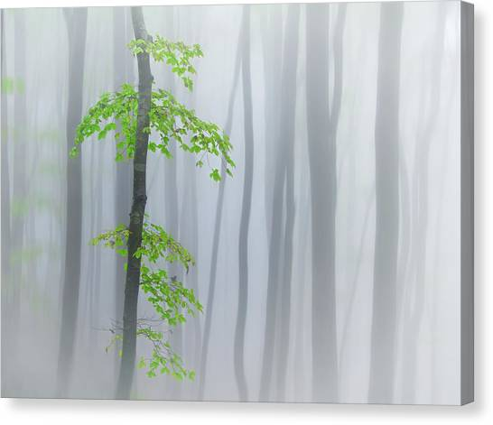 The Fog And Leaves Canvas Print by Michel Manzoni