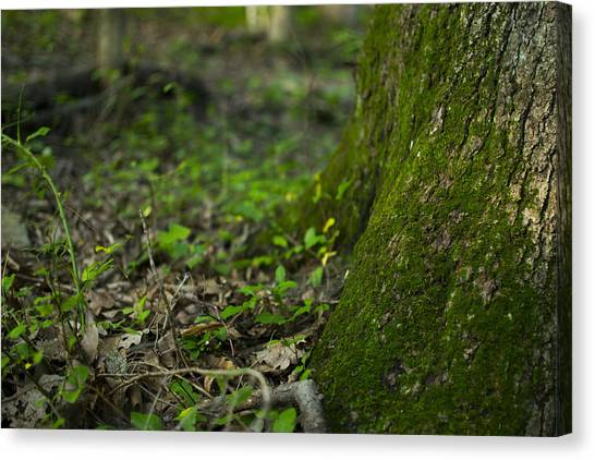 The Foot Of A Tree Canvas Print by Michael Williams