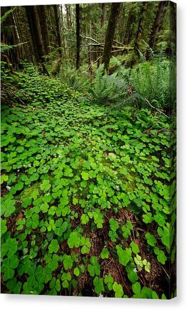 St. Patricks Day Canvas Print - The Forest Floor by Rick Berk