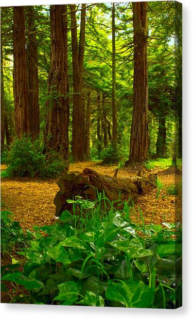 The Forest Of Golden Gate Park Canvas Print