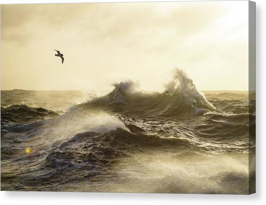 Drake Canvas Print - The Formidable Drake Passage by Justin Hofman