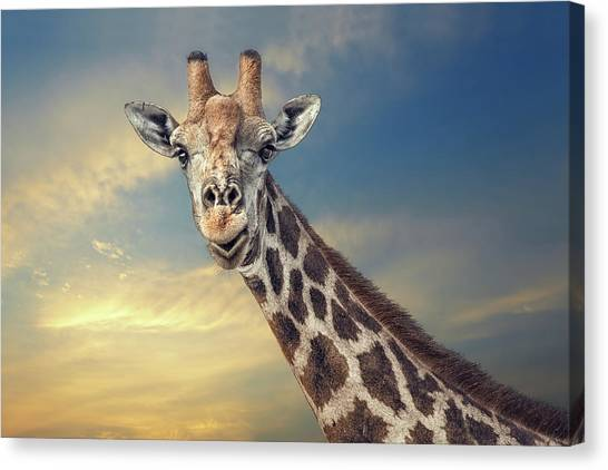 Camouflage Canvas Print - The Friendly Giant by Piet Flour