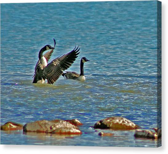 The Friendly Persuasion Canvas Print by Rhonda Humphreys