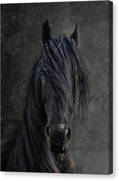 Black Stallion Canvas Print - The Frisian by Joachim G Pinkawa