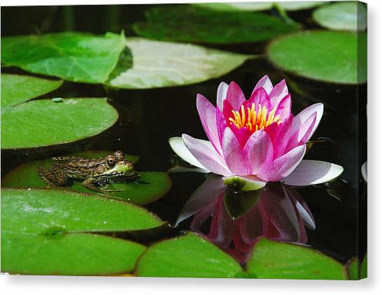 The Frog And The Lily Canvas Print