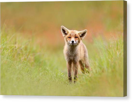 Baby Canvas Print - The Funny Fox Kit by Roeselien Raimond