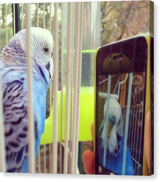 Parakeets Canvas Print - The #future Of #technology Even by Vincy S