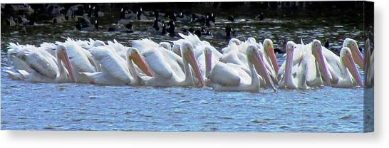 The Gathering 2 Canvas Print by Will Boutin Photos