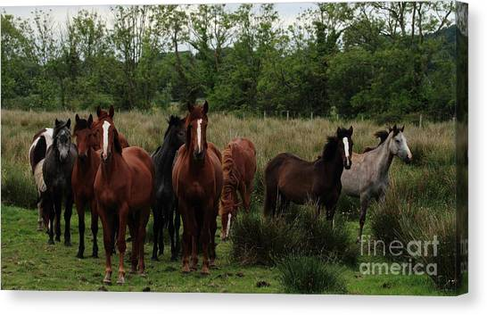 The Gathering Canvas Print by Peter Skelton