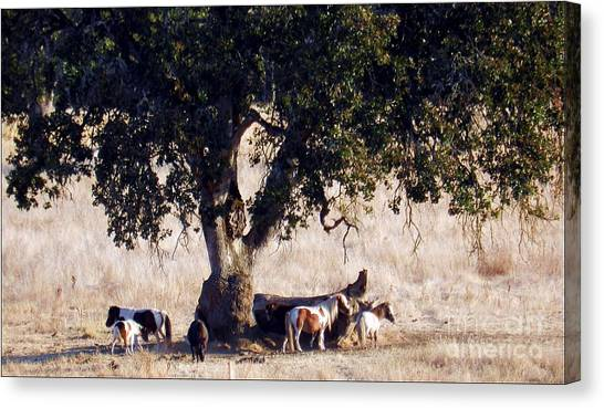 The Gathering Tree Canvas Print
