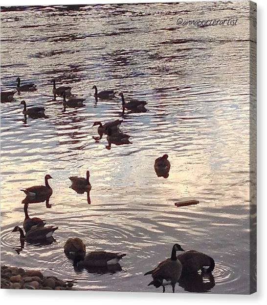 Geese Canvas Print - The Gathering - Willamette River Geese by Anna Porter