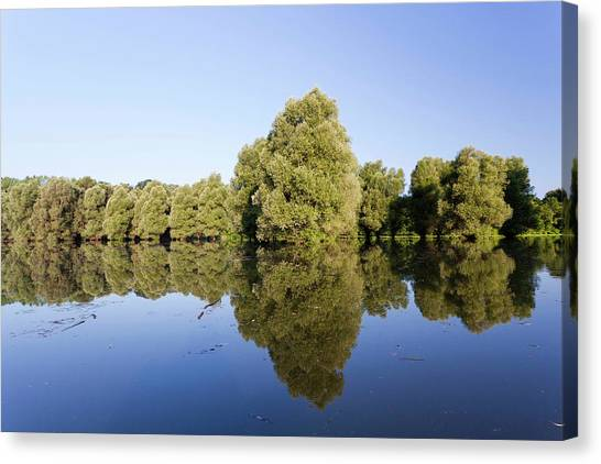 Danube Canvas Print - The Gemenc Forest In The Danube-drava by Martin Zwick