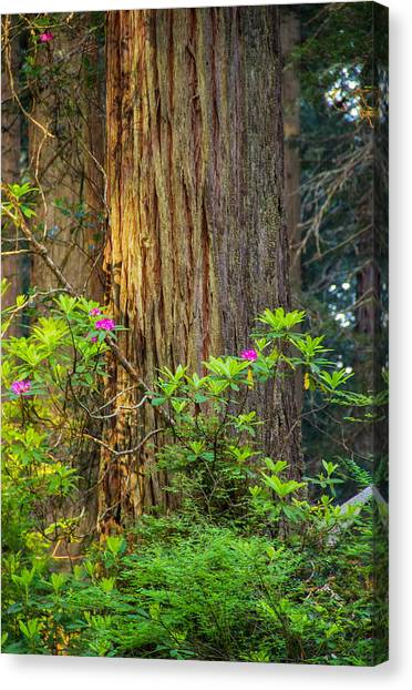 The Giant And The Flower Canvas Print