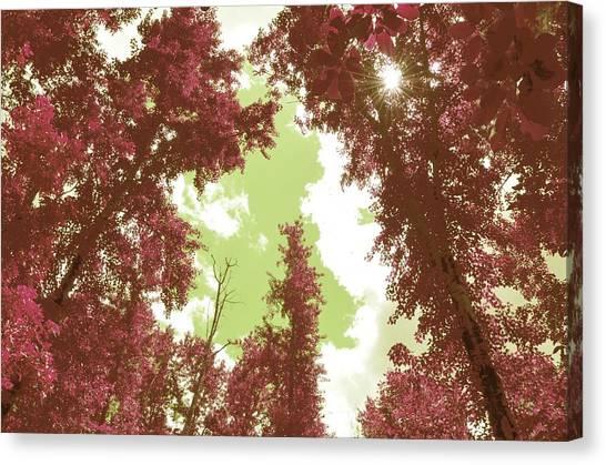 The Glimpse Sublime Canvas Print